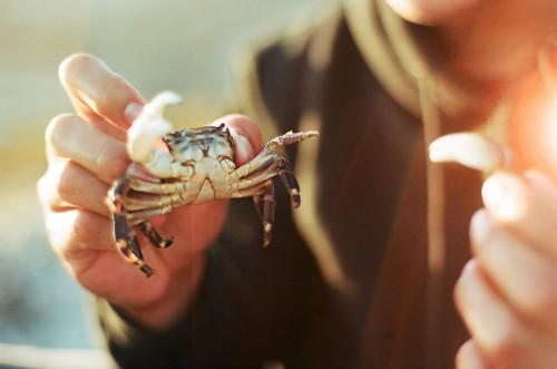 35mm_BeachCrab