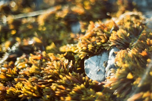 35mm_BeachGrass